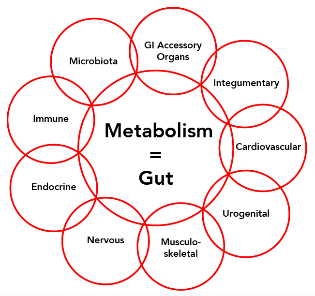 MetS metabolism = gut wheel