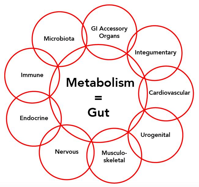 MetS metabolism = gut wheel